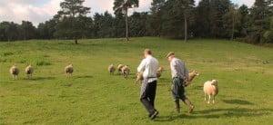 Head Chef walking with local farmer through a field of sheep